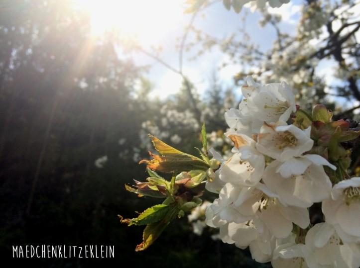 Blüte3